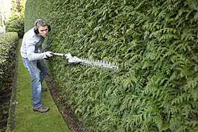 Boca Raton Hedge Trimming and Cutting - Boca Raton